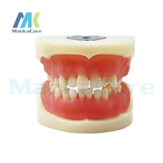 Manka Care - Physician certification model Oral Model Teeth Tooth Model pro teeth whitening oral irrigator electric teeth cleaning machine irrigador dental water flosser teeth care tools m2