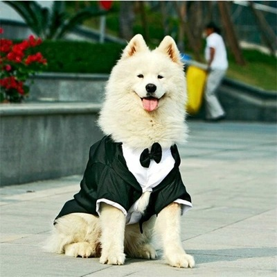Anjing besar besar pernikahan Tuxedo garmen pakaian untuk anjing bulldog, Pesta formal setelan dasi, Golden retriever, Anjing besar mantel jaket kostum