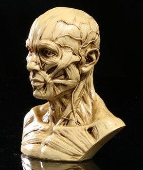 Mięśni symulacji żywicy czaszki czaszki czaszki medycznego manekin popiersie z dużą precyzją spersonalizowanych Dekoracji Domu 10*8.5*6 cm