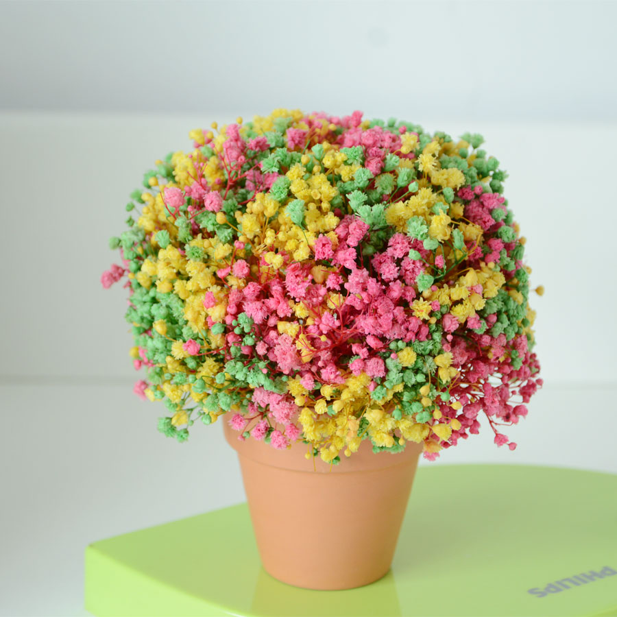 Eternal Life Babys Breath Of The Colored Birthday Gift Teacher S Day Home Office Decoration Furnishing