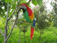 large 40cm green&red coloured feathers parrot model,artificial bird polyethylene&feathers handicraft,home decoration gift a1990