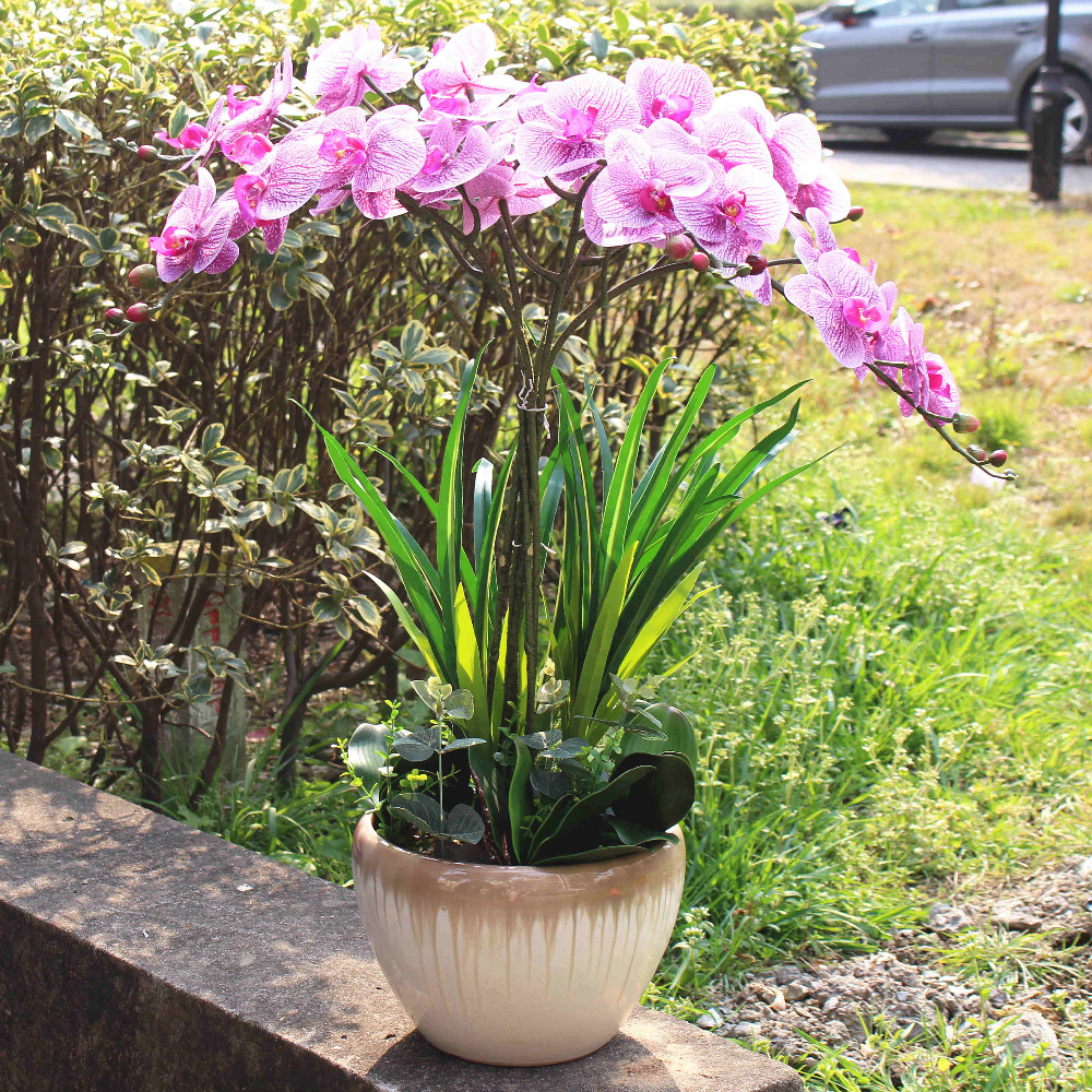 Popular Orchid Color-Buy Cheap Orchid Color lots from China Orchid ...