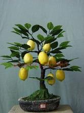 20 lemon bonsai fruit seeds Citrus limon Tree Seeds Fruit Garden Terrace Seed NO-GMO fruit and vegetable seeds for garden DIY