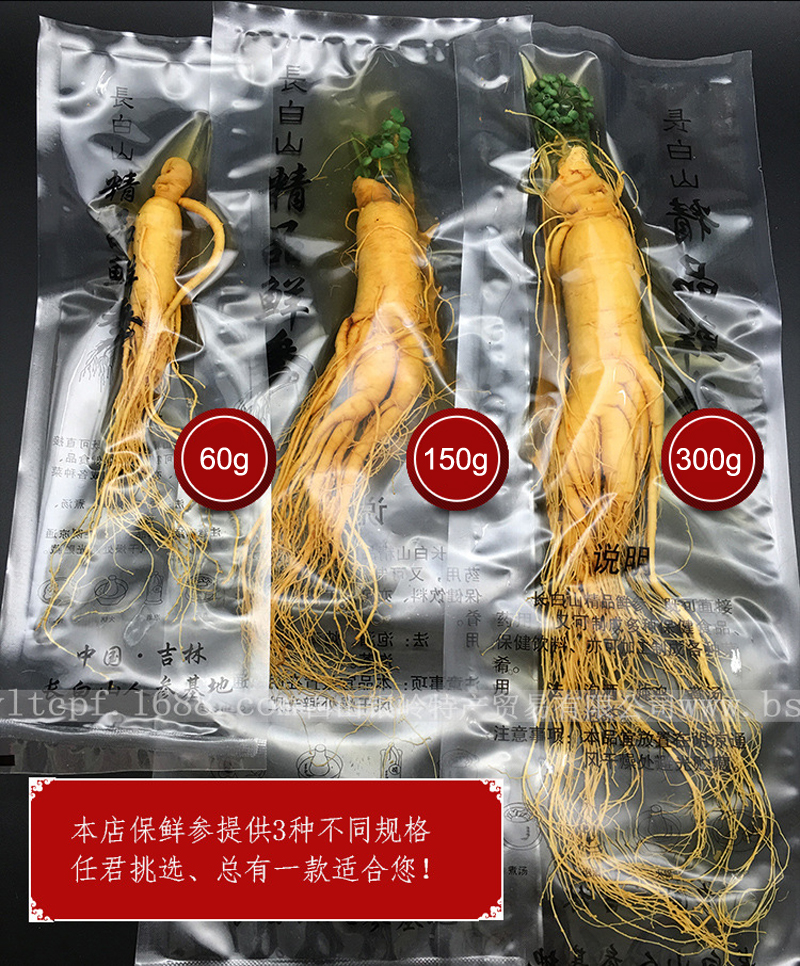 Changbai Top Grade Fresh Ginseng Root Vacuum Pack Panax Fresh Ginseng Root Body Relaxation