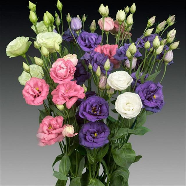 200 unids/bolsa raro Eustoma flor maceta Lisianthus flor planta variedad completa tasa de crecimiento 95%, (colores mezclados)