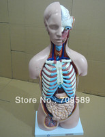 85CM Male Torso With Internal Organs 19 Parts Human Torso Anatomy Torso Mannequin