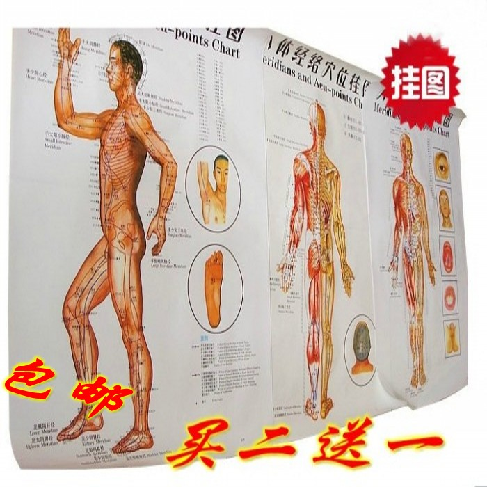ФОТО Meridian wallmap acupoint acupuncture point big wallmap