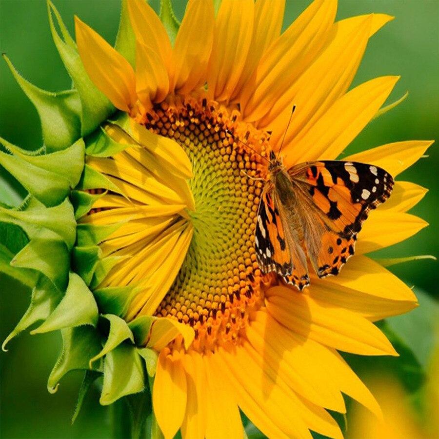 Sunflower DIY 5D diamond painting sunflower butterly f embroidery full rhinestones mosaic diamonds