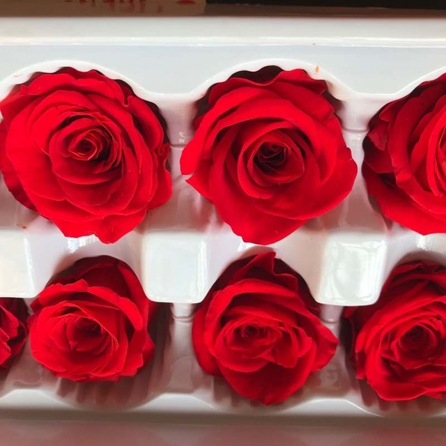 2 3cm Head 24pcs Mini Dry Natural Fresh Preserved Rose Beauty And The