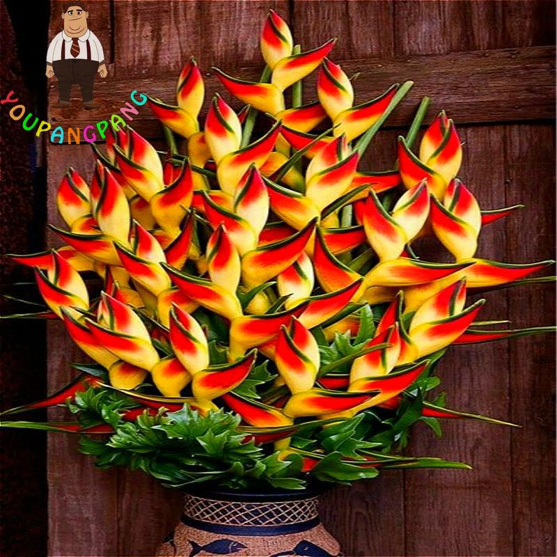 2017 New Strelitzia Reginae Bonsai Indoor Plants Flowers Bird Of Paradise Flower For Garden And Jardin 100 Pcs In From Home