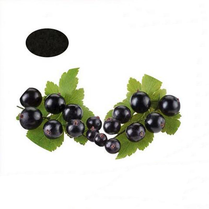 1000g Favorable price Blackcurrant extract  hot asle 1000g 10 1 hairyvein agrimony extract