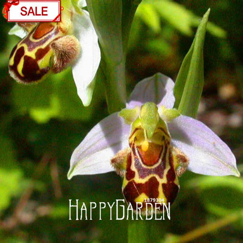 Большая распродажа! пчела Орхидея бонсай многолетние цветущие растения сад в горшке Необычные растения 50 частиц/упаковка, # NMB865