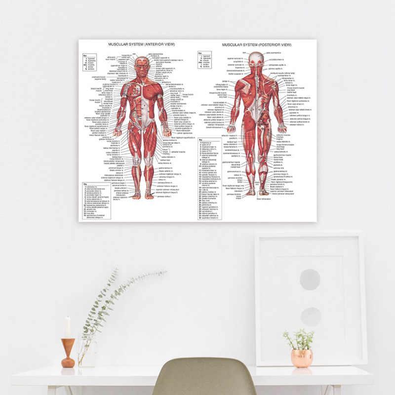 Анатомия человека Мышечная система Искусство Плакат Печать тела карта холст настенные картины для медицинского образования домашний декор