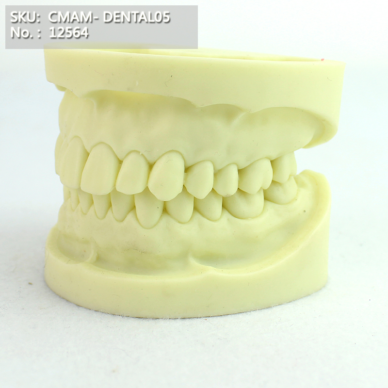 T CMAM/12564 Dental- Dental exercise, Human Oral Dental Medical Teaching Anatomical ModelT CMAM/12564 Dental- Dental exercise, Human Oral Dental Medical Teaching Anatomical Model