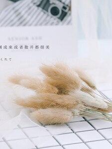 Image 3 - 天然大麦小麦耳 lampranthus ウサギ尻尾草写真撮影アクセサリー写真スタジオの小道具の背景背景飾り