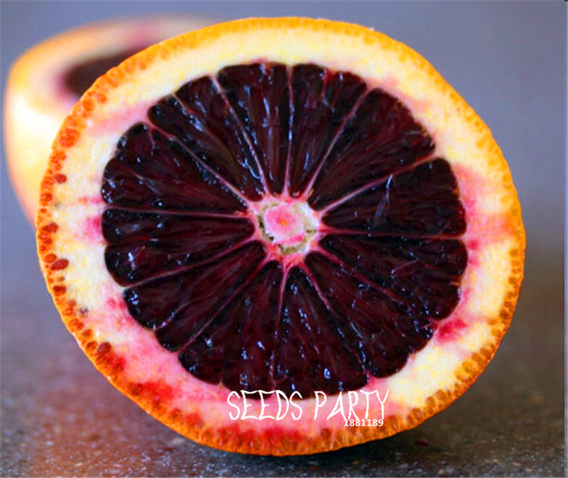 10 Seeds/Lot Promotion! Fresh Rare MORO BLOOD orange Red Blood Orange SEEDS bonsai fruit tree seeds