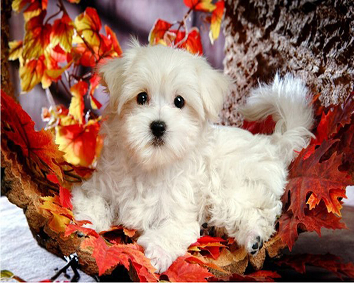 Dogs White Leaves Diamond Painting Pokemon Maple Leaf Puppy DIY 3D Diamond Embroidery A Picture Of Rhinestones For Needlework