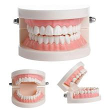 Pro badanie stomatologiczne nauczania biały Model zębów standardowe próchnicy pielęgnacja zębów jamy ustnej edukacja medyczna sprzęt dentystyczny narzędzie do pielęgnacji jamy ustnej