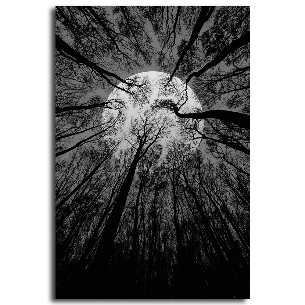 Black and white spooky with trees forest at the night wall picture wall art landscape canvas painting home decor decor pictures in painting calligraphy