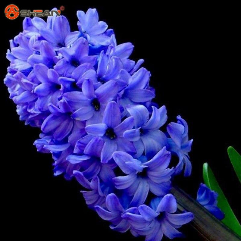 achetez en gros bleu fleur de jacinthe en ligne des grossistes bleu fleur de jacinthe chinois. Black Bedroom Furniture Sets. Home Design Ideas