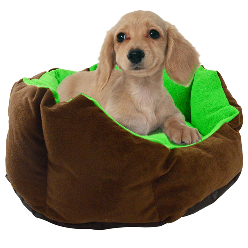 puppy little site your dog pawz happy sleepy best bed road beds the for