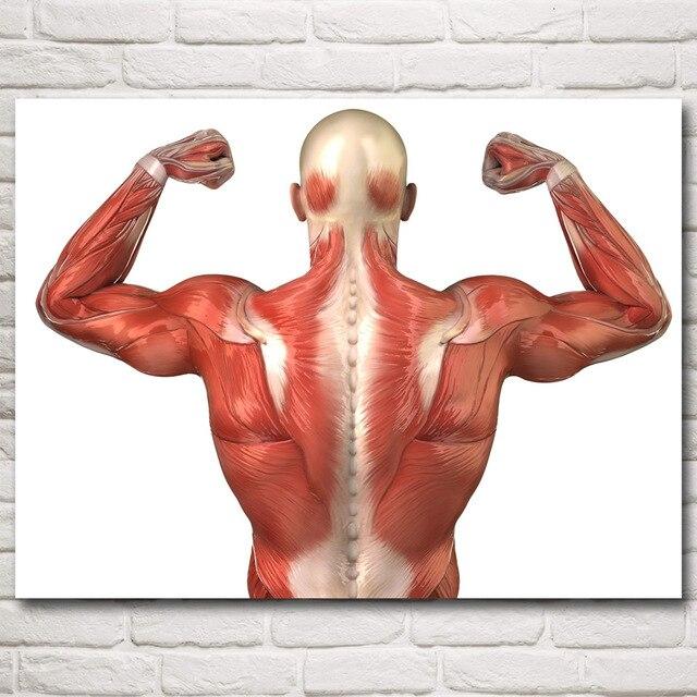 Anatomy Veins Arteries Skeleton Muscles Art Silk Poster Prints Home