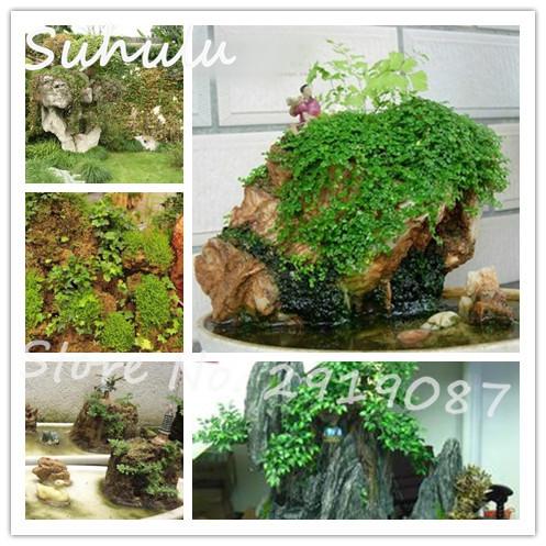 rare rocalla semillas de subir la tradicin de verde fresco natural de plantas de mezcla varios diy jardn de