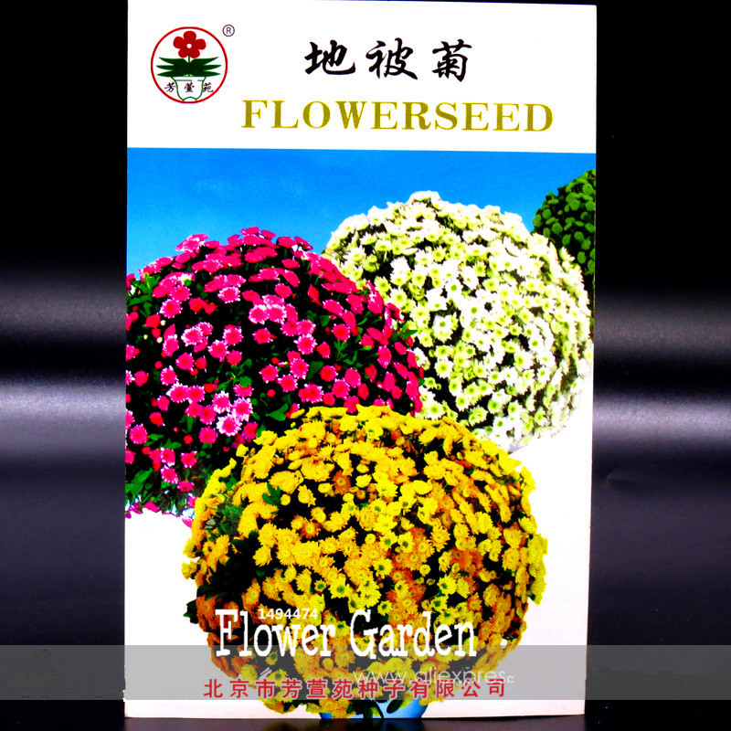 Big Promotion! Perennial Root Ground-cover Chrysanthemum Flower Seeds, Original, 50 Pcs / Pack, Easy to Grow,#ZS1Y32