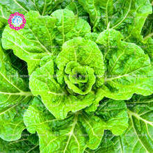 11.11 Big Promotion!100 pcs/lot Chinese cabbage seeds green vegetable seed potted in garden&home fresh annual herb plant seeds