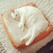 Fashion Toast Bread Pet Cat Cushion Cartoon Soft Puppy Dog Plush Bread Toast Bed Mats Seat цена и фото