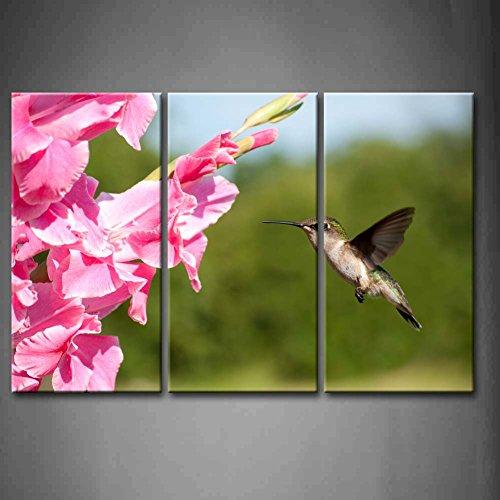 Popular Hummingbird Pink-Buy Cheap Hummingbird Pink lots ...