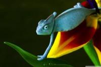 Home decoration blue chameleon Silk Fabric Poster Print DW324
