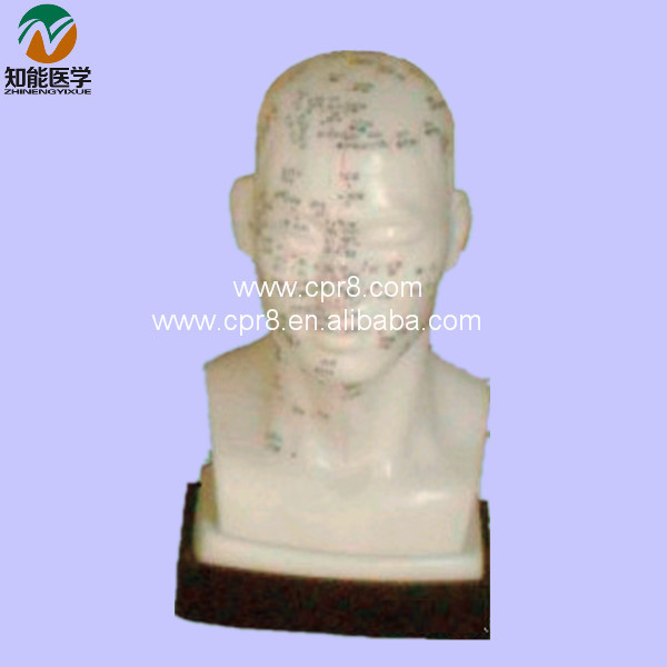 Acupuncture Model (Life-Size Head Acupuncture) BIX - Y1020 MQ017 22cm head acupuncture point model head acupuncture four function model acupuncture model
