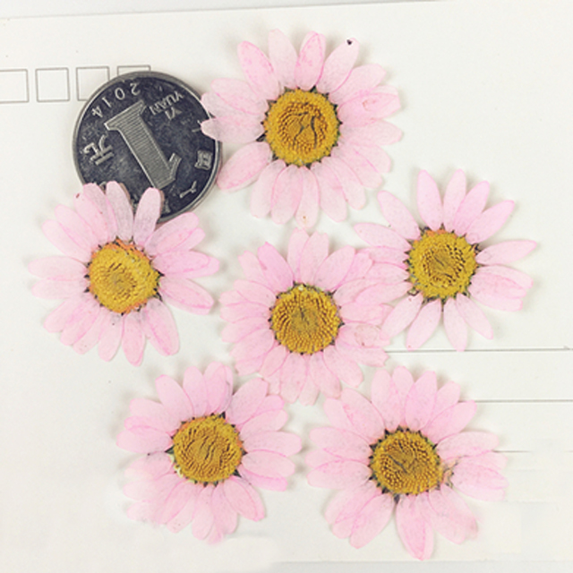 Pressed Wedding Flowers: Hot Large Chrysanthemum Diameter 3.5 CM Hand Pressed