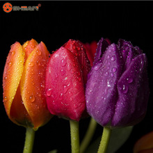 Yellow Purple Red Tulips Seeds Flowering Plants Indoor Potted Plants Tulip  100 Particles / lot