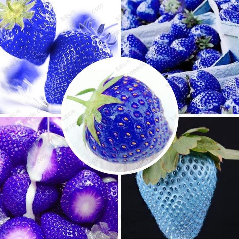 Balkon frugt jordbær blå jordbær lækker jordbær ananas bonsai 100 pc / lot