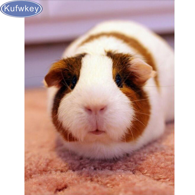 Full Diamond Embroidery Guinea Pig 5d Diamond Painting Cross Stitch
