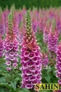 15pcs/bag purple Foxglove Candy Mountain flower Seeds DIY Home Garden