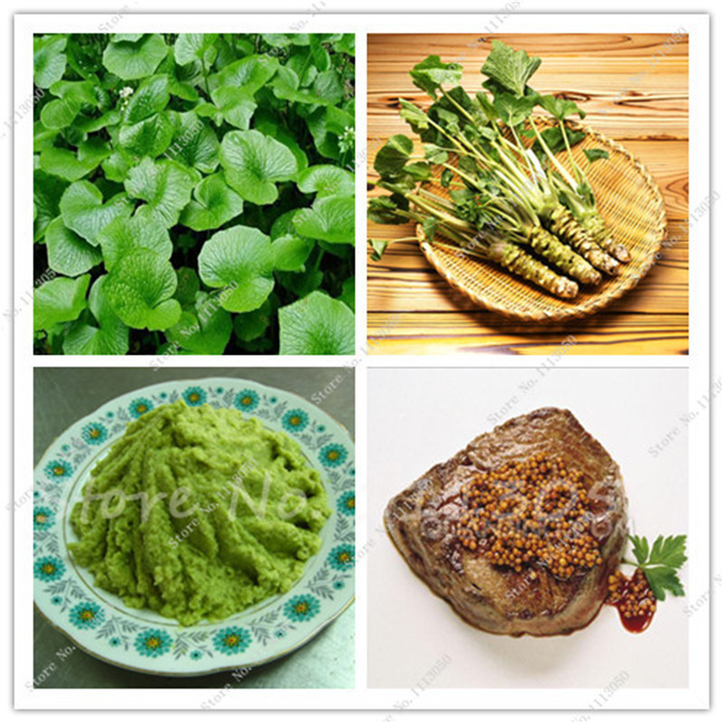 100 pcs lot wasabi seeds japanese horseradish seed for Easy to grow outdoor plants