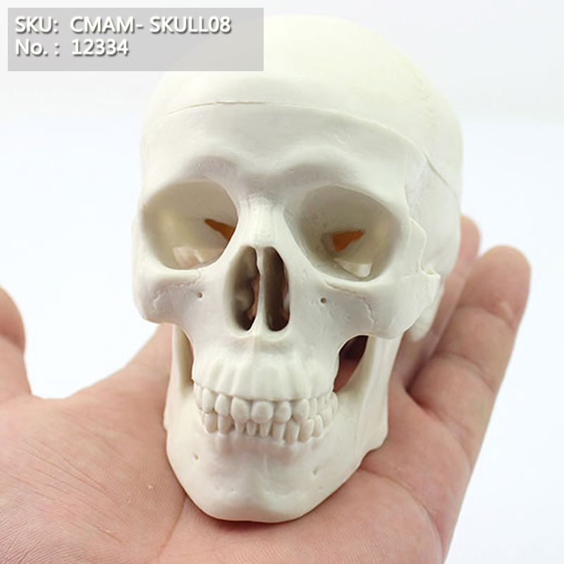 CMAM / 12334 Skull, mini, plastikust kolju meditsiiniline anatoomiline mudel