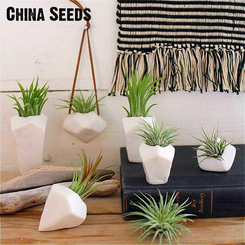 2016 A Big Sale 100 Pcs / Bag Color Grass Seeds For Indoor Plants Christmas Mini Bonsai Hanging Decorative Home * Garden Plants