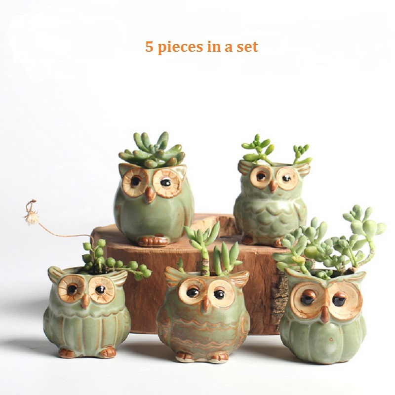 5pc set cartoon owl shaped flower pot for succulents. Black Bedroom Furniture Sets. Home Design Ideas