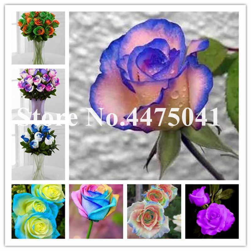 100 個 2019 新レアローズ盆栽、レインボーローズ家の庭の装飾多年生植物花