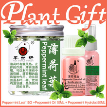 Plant gift Skin Care Health Christmas Sets Peppermint essential oil, Hydrolat,Mint tea, Black Head Clean Pores anti acne