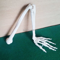 HOT Life Size Upper Extremity Model, Human Arm Joint Model
