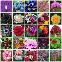 25 tipos De sementes De Flores Sementes de Plantio Ao Ar Livre DIY Decoração Beleza Casa Jardinagem Paisagismo Decorativo