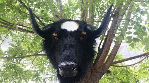 big simulation cow head model plastic&fur black cattle head doll gift 56x38x50cm a132 big sitting simulation white cat model plastic