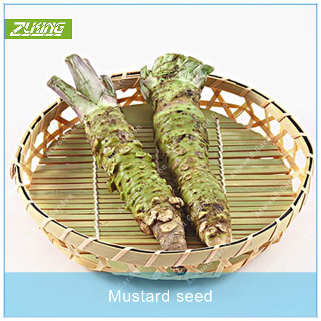 ZLKING 200pcs Mustard  Vegetable  Bonsai Plants For Home Garden Chinese Vegetable  Super Natural Products
