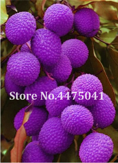 US $0 12 82% OFF|100% True 10 Pcs Lychee Bonsai Tropical Fruit Tree Plant  In Bonsai, Chinese Litchi Plant For Home Garden Pot 95% Survival Rate-in