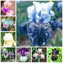 цены на 500 Pcs Bonsai Iris FlowerMul-Color Perennia Flower Rare Bearded Orchid Nature Flower Plants DIY For Garden Planting Easy Grow  в интернет-магазинах